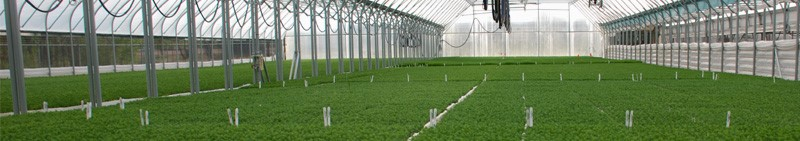 Tree Seedlings About Usthe Greenworld Project