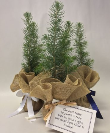 Burlap Tree Kit